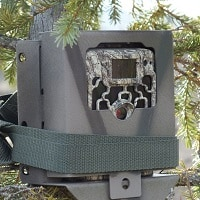 trail camera installed on the tree