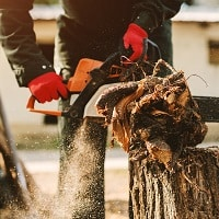 Close up of electric saw in mans hands cutting big part of tree.