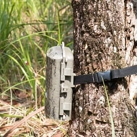 trail camera attached to the tree