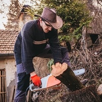 Cutting Wood With Electric Chainsaw